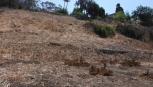 Ventura Westside Bicycle and Pedestrian Improvements Project, City of San Buenaventura, California