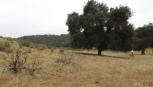 East Cat Canyon Oil Field Redevelopment Project, Santa Barbara County, California