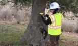 Oak Tree Inventory